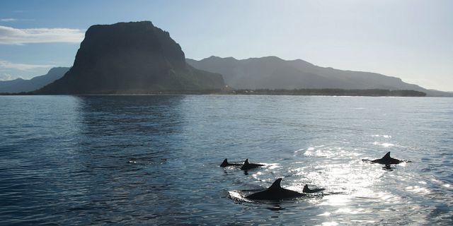 photos/ile-maurice-mer-ocean.jpg